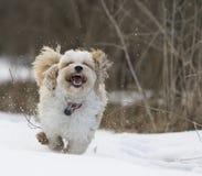 Собака маргаритки Стоковые Изображения RF