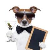 Собака Мартини стоковое изображение