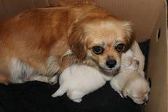 Собака матери с ее щенятами стоковое изображение rf