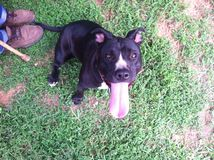 собака малая Стоковая Фотография