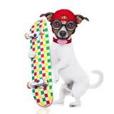 Собака мальчика конькобежца Стоковые Фото
