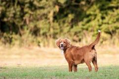 собака меньшее река профиля Стоковые Фото