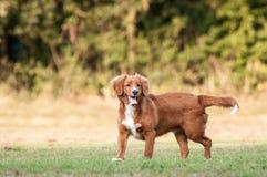 собака меньшее река профиля Стоковое Изображение RF