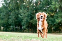 собака меньшее река профиля Стоковые Изображения RF