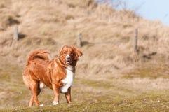 собака меньшее река профиля Стоковая Фотография