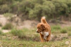 собака меньшее река профиля Стоковые Фотографии RF