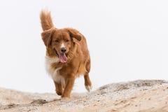 собака меньшее река профиля Стоковое Фото
