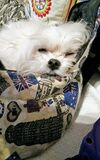 собака мечтая на софе стоковая фотография