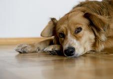 собака мечтая пожар Стоковая Фотография RF