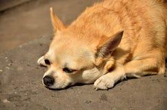 Собака милая Стоковые Фото