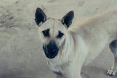 Собака милая Стоковые Изображения RF