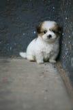 собака младенца Стоковые Изображения