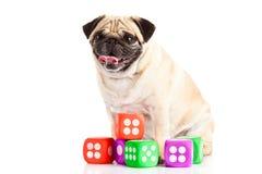 Собака мопса изолированная на белой предпосылке dices любимчик и игрушка Стоковая Фотография RF