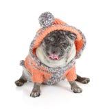 Собака мопса Стоковые Изображения RF