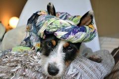 Собака 2 моды стоковые фотографии rf