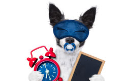 Собака младенца Sleepyhead Стоковые Изображения