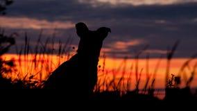 Собака наблюдая заход солнца стоковые фотографии rf