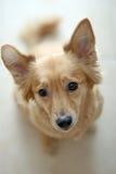 собака над белизной Стоковое Изображение RF