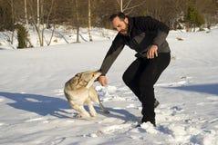собака нападения Стоковая Фотография RF