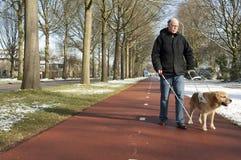 Собака направляющего выступа помогает слепому человеку