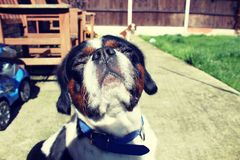 Собака наслаждаясь солнечностью стоковая фотография
