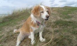 Собака наслаждается морским бризом стоковые изображения rf