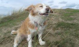 Собака наслаждается морским бризом стоковое изображение
