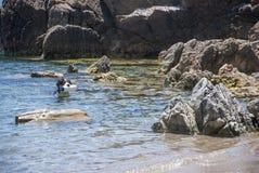 собака натренированная для спасения пока тренирующ на море Стоковая Фотография