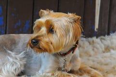 Собака наш друг стоковое изображение rf
