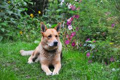 Собака наш друг стоковые изображения rf