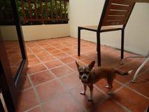 собака на балконе ждать предпринимателя стоковые фотографии rf