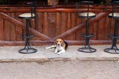 Собака на баре Стоковая Фотография