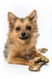 Собака на белизне стоковое фото