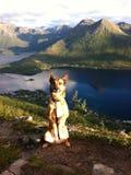 Собака на верхней части стоковое фото rf