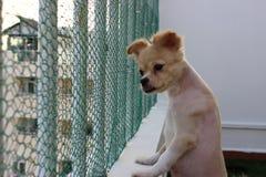 Собака на верхней части Стоковое Изображение RF