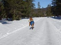 Собака на вспаханной дороге в Isartal Стоковое Изображение