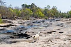 собака на высушенном реке Стоковое Изображение