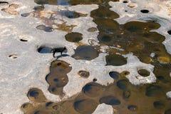 собака на высушенном реке Стоковые Изображения