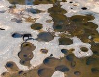 собака на высушенном реке Стоковое Фото