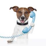 Собака на говорить телефона Стоковое Изображение RF