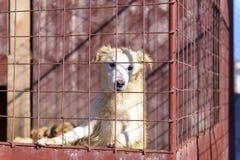 Собака на загородке Стоковые Фото