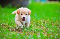 Собака на зеленом поле травы лета. Стоковые Изображения