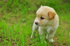 Собака на зеленом поле травы лета Стоковое Изображение RF