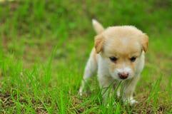Собака на зеленом поле травы лета Стоковые Фотографии RF
