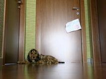 Собака на караульной службе Стоковая Фотография
