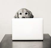 Собака на компьютере стоковая фотография