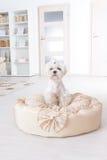 Собака на кровати собаки Стоковое Изображение RF