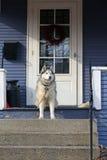 Собака на крылечке стоковое фото rf