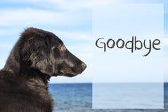 Собака на океане, тексте до свидания Стоковая Фотография RF