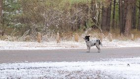 Собака на дороге в зиме сток-видео